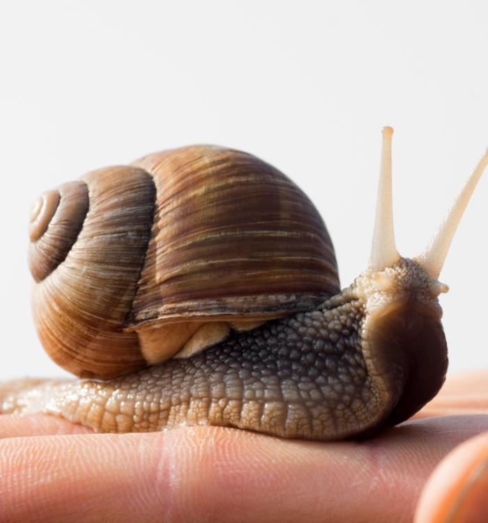 Les étonnants pouvoirs de l'escargot